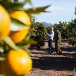 La mejor variedad de naranjas en Naranjas Daniel